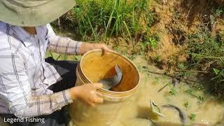 Legend Fishing Video fishing 2019 Using Skill Catching Very Big Fish In Small Lake In Rice Farm