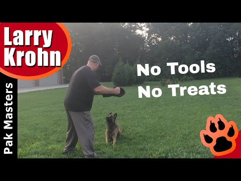 Dog training goals / true obedience without assistance