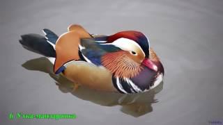 Самые красивые птицы в мире.