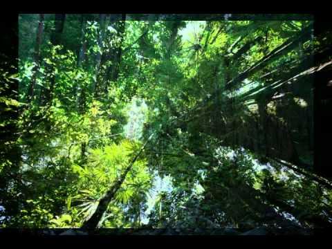 Hijau (Malaysia Rainforest Song) - Zainal Abidin