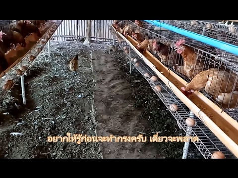 พื้นไก่ไข่ยืนกรง สำคัญเป็นลำดับต้นๆในการเลี้ยงไก่ไข่ยืนกรง รู้ไว้ข้อดีข้อเสีย