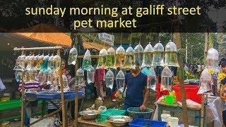 Sunday morning at galiff street pet market (hati bagan) || galiff street pet market short trip