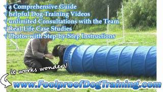 Canine Behaviour And Training Courses - Canine Training