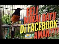 Beli Murai Batu Online Di Facebook Aman  Mp3 - Mp4 Download
