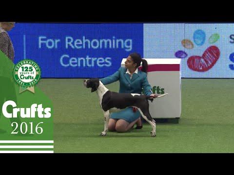 International Junior Handling Competition Part 2 | Crufts 2016