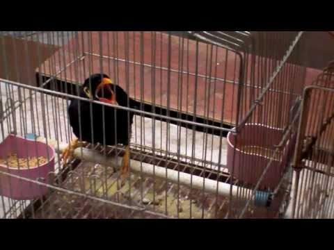 Tiermarkt in Shanghai - Pet Market in Shanghai