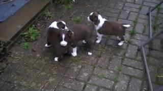 Wiz and Mia Pups