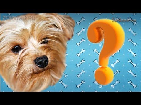 Сколько живут собаки | В домашних условиях | В среднем.