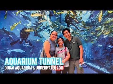 Aquarium Tunnel at Dubai Aquarium & Underwater Zoo | World's Largest Suspended Aquarium | MIKAY TV