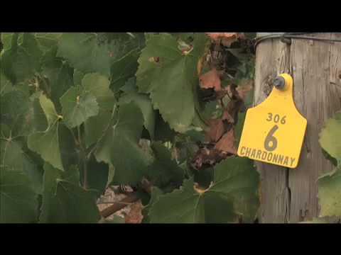 An Adelaide Hills Vineyard