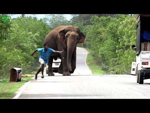 A elephant demands and gets all the food from travelers.Never feed elephants