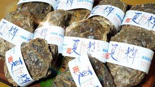 この夏輝(かき)うまいっ! Dear Oversea Viewers, Thank you for watching my video everytime. I would like you to know more about our Japanese seafood.