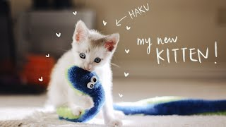 I got a KITTEN!    a day in my life
