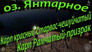 Русская рыбалка 4 озеро Янтарное Карп красный Старвас чашуйчетый Карп Рамчатый призрак
