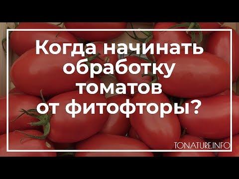 Когда начинать обработку томатов от фитофторы?   toNature.Info