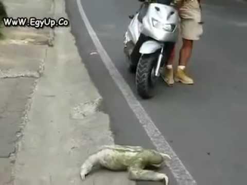 con vật kỳ lạ băng qua đường.