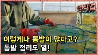 극한직업 - Extreme JOB_서해안 꽃게 잡이_#001 thumbnail
