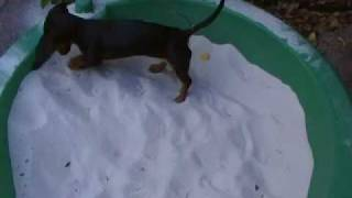 My dog in the sand box