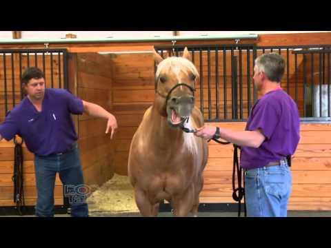 doctalk---equine-chiropractic-medicine