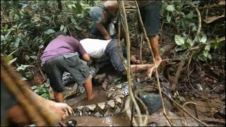 great-snakes-indonesians-wrestle-with-giant-python