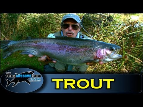 Trout fishing at dever springs with graeme pullen series for Youtube trout fishing