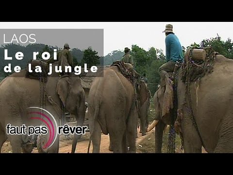 laos le roi de la jungle reportage complet. Black Bedroom Furniture Sets. Home Design Ideas