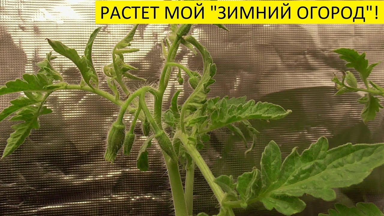 """ОБЗОР """"ЗИМНЕГО ОГОРОДА"""" 13 октября. Ольга Чернова."""