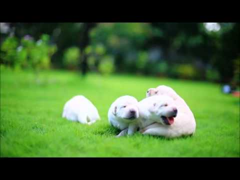 ▶ Upbeat and Happy Background Music    Something Cute  by FirstNote   YouTube 720p