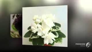 Белые фиалки  Чем привлекают белые фиалки(Белые фиалки Чем привлекают белые фиалки.Белые фиалки. Прекрасные белые фиалки украшают любой дом. Домашни..., 2014-10-01T18:38:28.000Z)