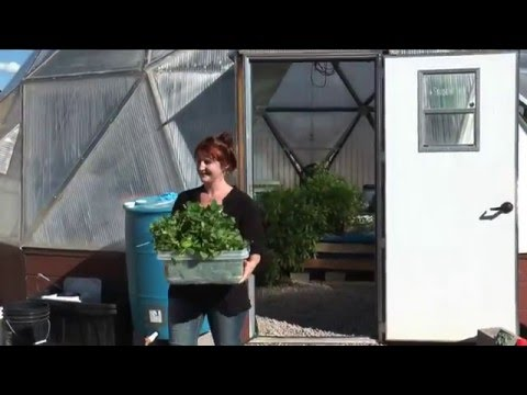 From Greenhouse to Table with Aquaponics at Santa Fe Community College