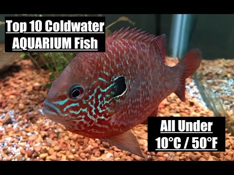 Top 10 COLDWATER Fish
