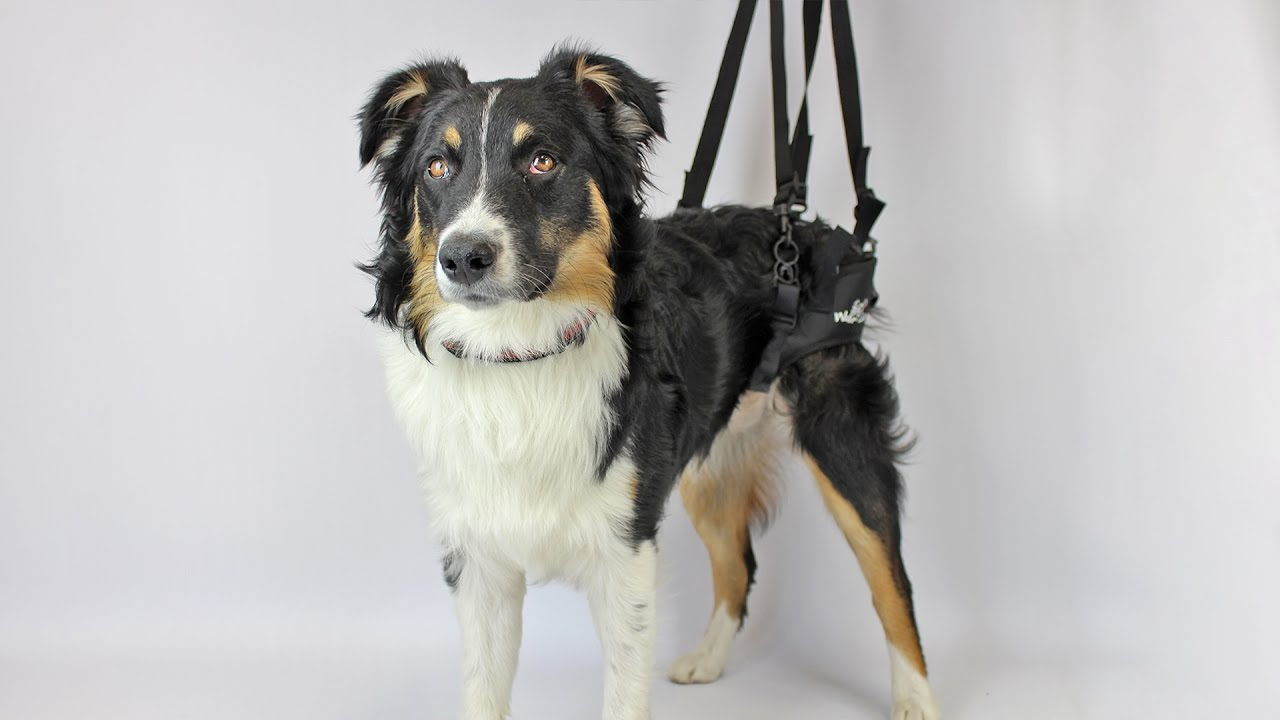 best dog lifting harness