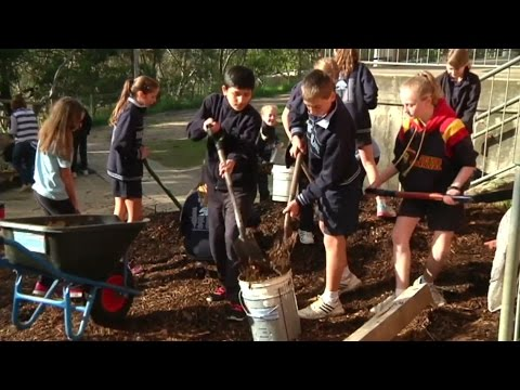 Belair PS's new garden for World Environment Day - 3News