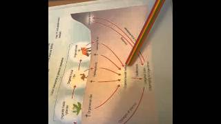 Fosfors Kredsløb Biologi B