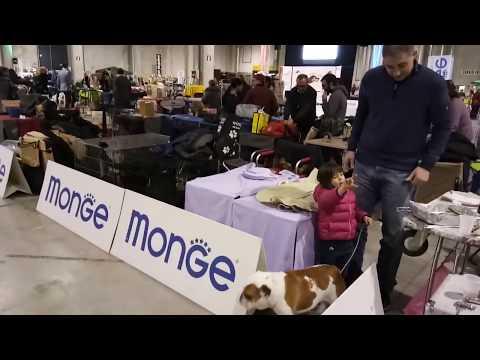 Dog Show Italy - Bhola Shola