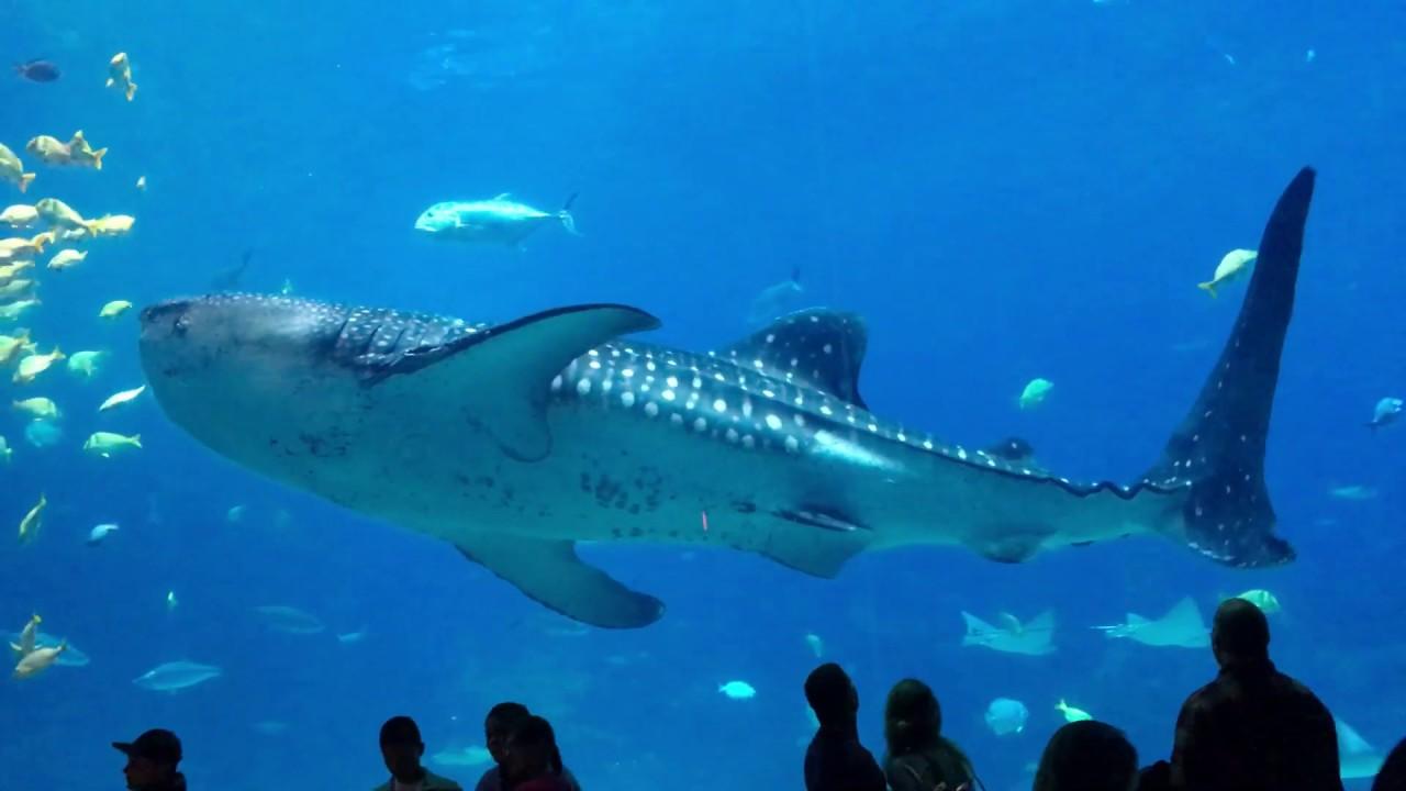 Worlds Largest Aquarium, Atlanta, Georgia, USA - YouTube