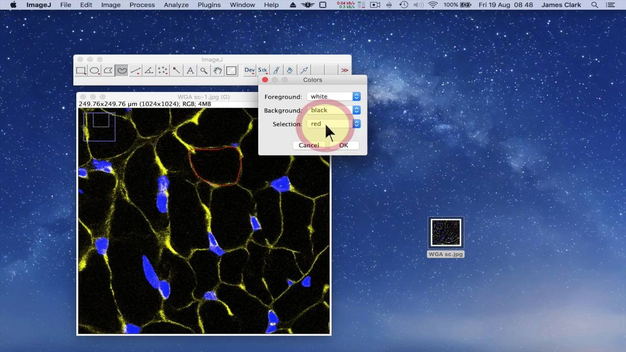 Imagej background - Using Imagej To Measure Cell Number And Cross Sectional Area Of Confocal Images
