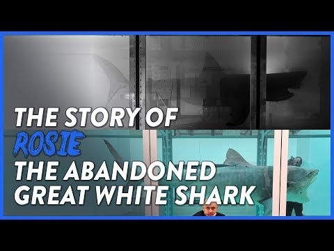 the-story-of-shark-rosie---left-to-rot-at-an-abandoned-wildlife-park