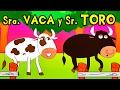 Tubidy SEÑORA VACA Y SEÑOR TORO - canciones de la granja - Videos para NIños - Lunacreciente