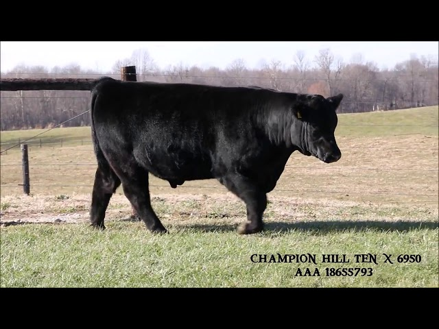 Kentucky Angus Sweepstakes Lot 60