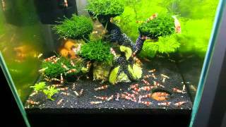 Fütterung meiner RedBee Garnelen | 19 L Aquael Cube