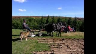 Labour avec des Chevaux Canadien atteler sur une charrue Légaré # 25 par une belle journée venteuse