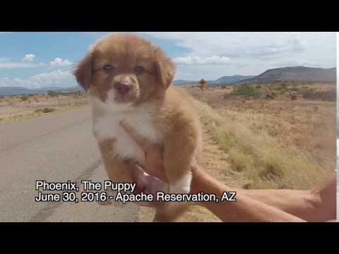 Phoenix, The Puppy - Hello World
