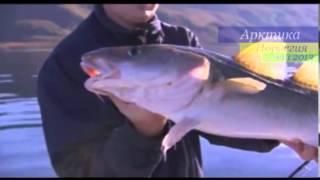 Подводная охота и рыбалка в Норвегии (Нордкап). Трейлер(Норвегия, Нордкап, май 2013. Следите за обновлениями, подписывайтесь на видео-канал. Будет интересно., 2013-04-25T18:27:57.000Z)