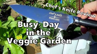Busy Winter Day in the Garden plus Chef's Knife Review!