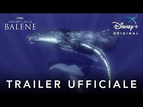 Disney+   I Segreti delle Balene - Serie Originale in Streaming dal 22 Aprile
