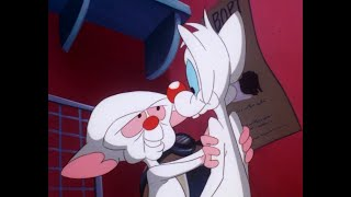 Pinky and The Brain AMV - Always You