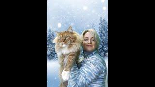 """Памятка для покупателей. Мясной рацион котят мейн - кун из питомника """"Волжский прайд"""""""