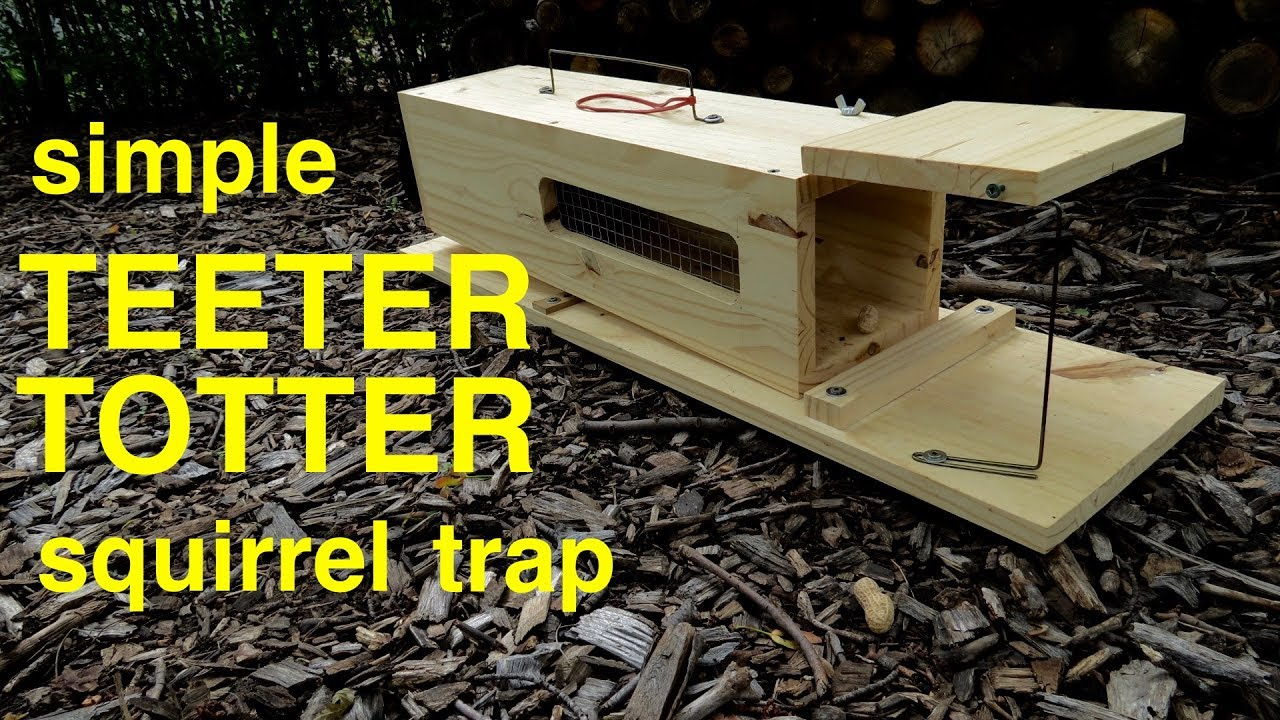 How To Make A Simple Humane Teeter Totter Squirrel Trap