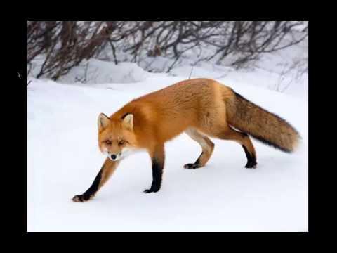 WEBINAR | Photographing Wildlife in the Wild